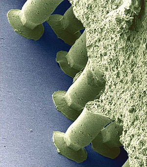 Image from a scanning electron microscope of the Gecko®-Tape